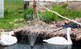 Усадьба «Сасновы гай», Дворовая территория