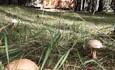 Агроусадьба «Старинки», можно собирать грибы прямо у порога