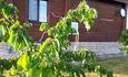 Агроусадьба: Коттедж «Прибрежный» (Нарочанский Уют)