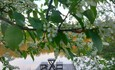 Агроусадьба «Марусина Хата»