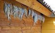 Рай рыбака озеро Свирь | усадьба Набережная, Озеро Свирь рыбалка