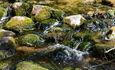 Голубые озера усадьба Трабутишки