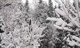 Агроусадьба «Лесной островок»