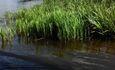 Агроусадьба «Клевый Берег»
