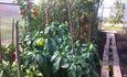 Агроусадьба «Хуторок»