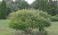 Агроусадьба «Видзы-Ловчинские»