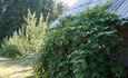 Агроусадьба «Сасновы водар»