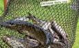 Агроусадьба «Ельня», экскурсии на болото