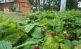 Агроусадьба «Цветные сны»