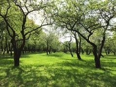 Экскурсия по Лошицкому парку