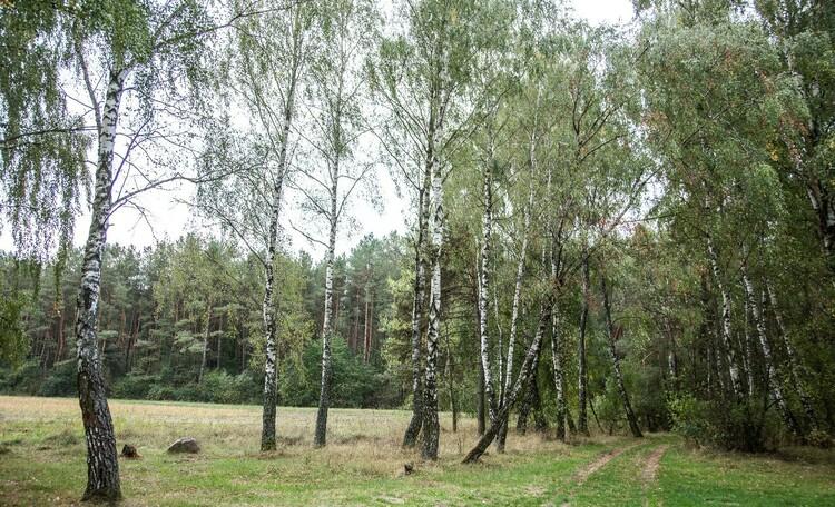 "Stead ""Lesnaya Paulinka"" (""Forest Paulinka""), ПРИРОДА ОКРУЖАЮЩАЯ УСАДЬБУ."