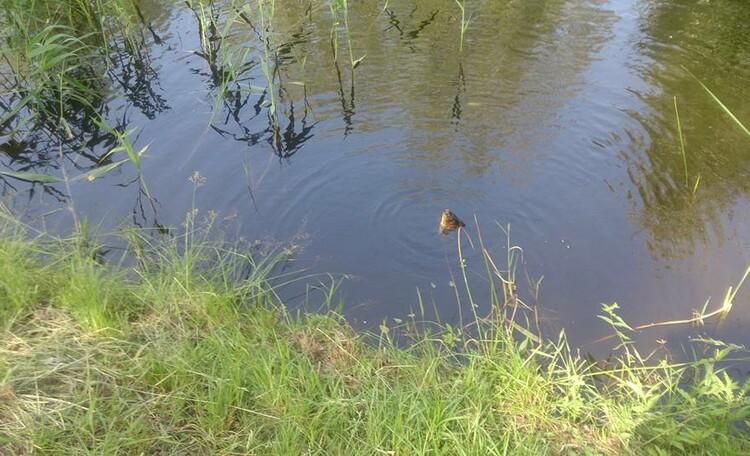 Агроусадьба «Заезд Зубачи», Рыбалка в Заезде Зубачи