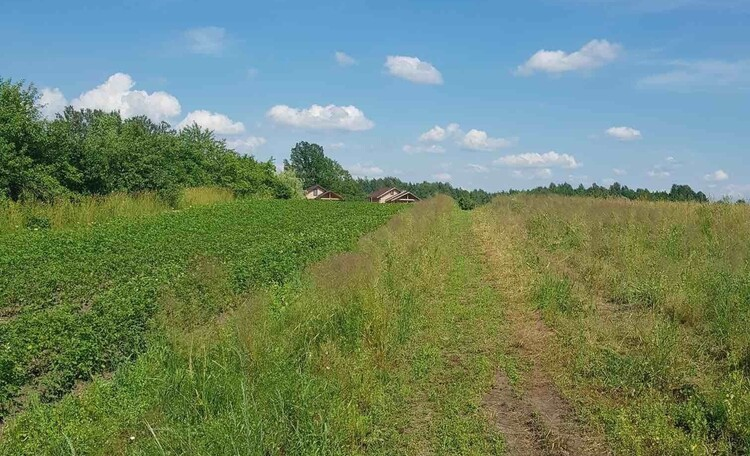Агроусадьба, д. Браславская Лука