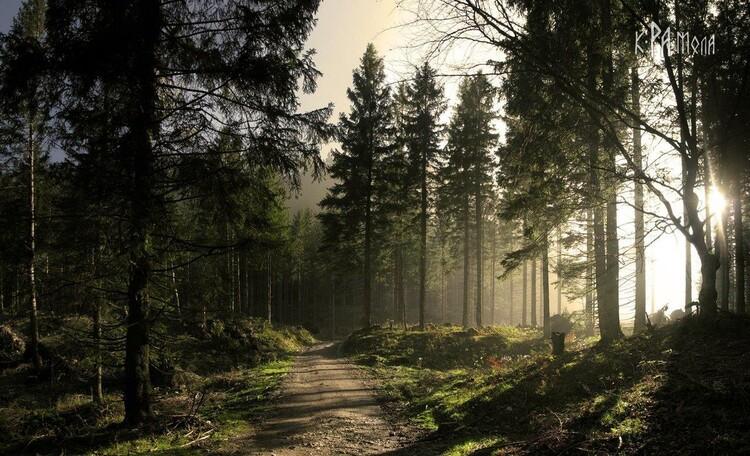 """Усадьба """"Солнечный домик""""  в Беловежской пуще, Окрестности нашей усадьбы. Лесная дорожка для прогулок"""