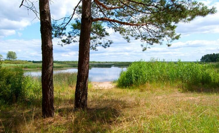 "Homestead ""Sosnovyiy Gai"" (""Pine grove""), Природа вокруг усадьбы"