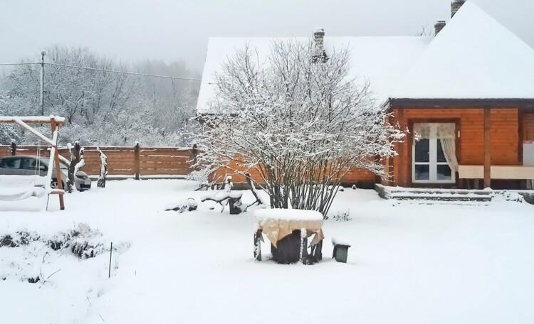 Зима в Беловежской пущи.