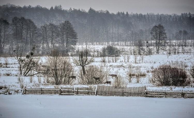 Усадьба «Беловежское поместье», вид на Беловежскую пущу из окна усадьбы