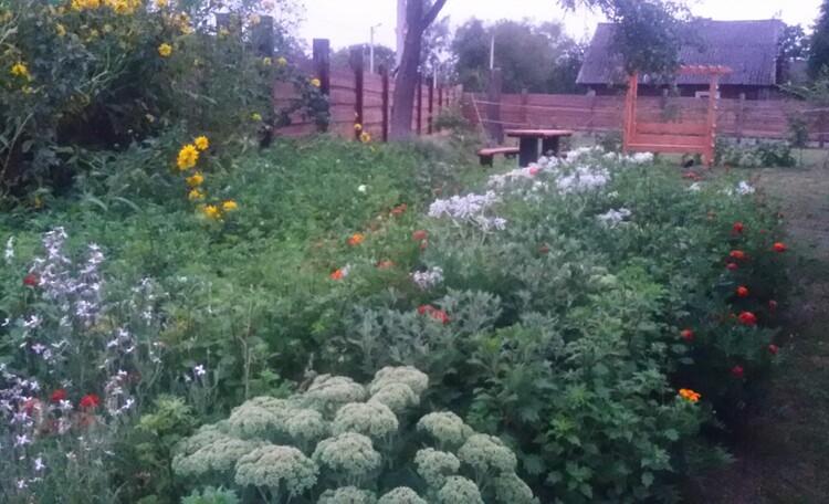Агроусадьба «У лешего»