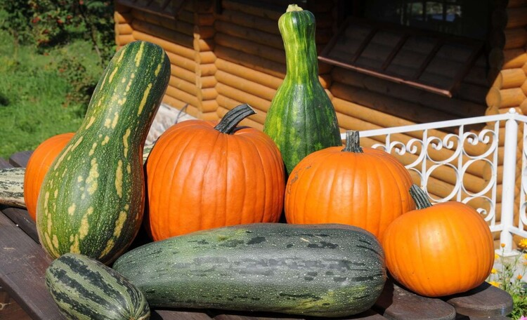 Гостевой домик на Уссе