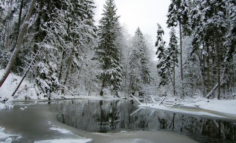 Голубые озера домик в лесу. Нарочанский край