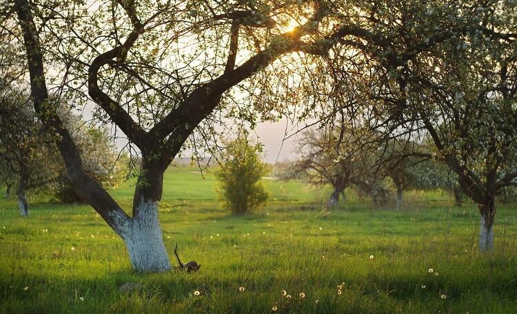 """Усадьба """"Солнечный домик""""  в Беловежской пуще, Сад плавно переходит в лес."""