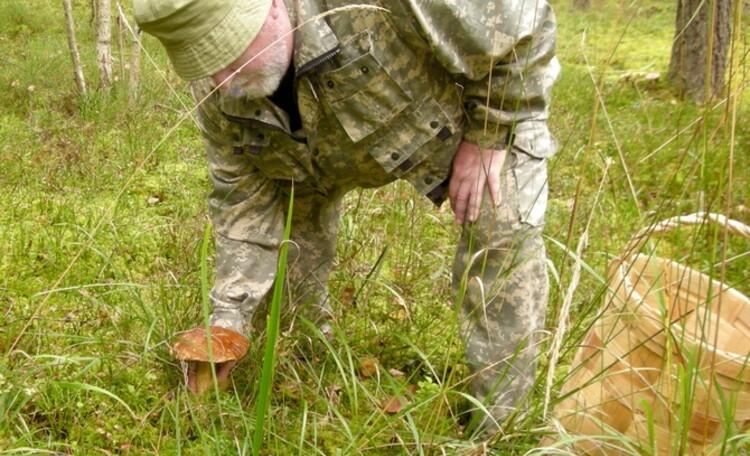 У Петровича, Грибы в здешних лесах не ищут, их собирают.