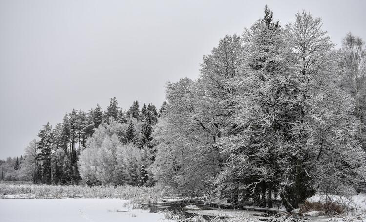 Голубые озера усадьба Трабутишки, Вид из бани.