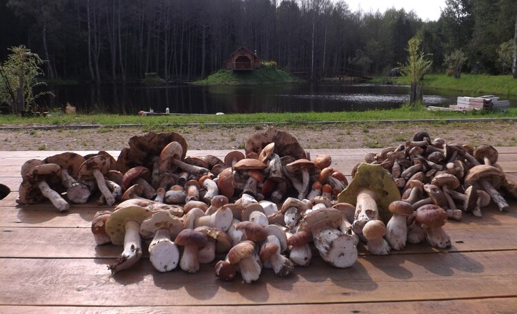 Агроусадьба «Лесной островок», у нас очень грибные места
