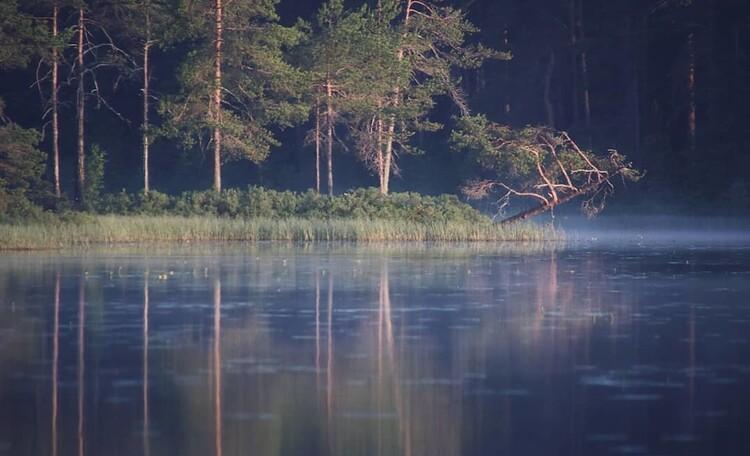 """Усадьба """"Солнечный домик""""  в Беловежской пуще, Окрестности нашей усадьбы. Рассвет на озере."""