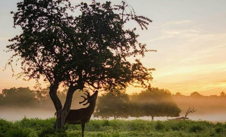 """Усадьба """"Солнечный домик""""  в Беловежской пуще, Окрестности нашей усадьбы. Максимум общения с природой."""