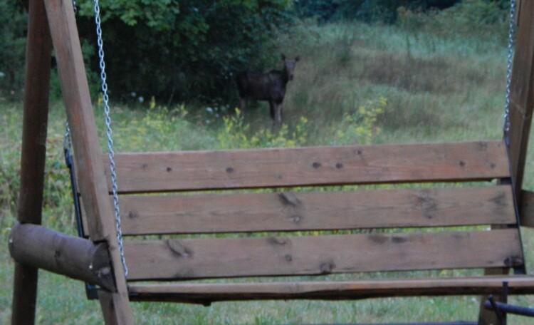 Агроусадьба «Сонная лощина», А кто это там пришел в гости??