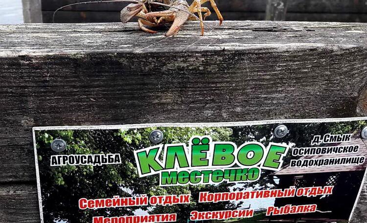Усадьба «Клевое местечко» на берегу Осиповичского водохранилища