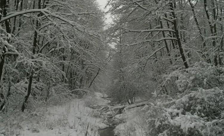 Дом отдыха «Лесной уголок»