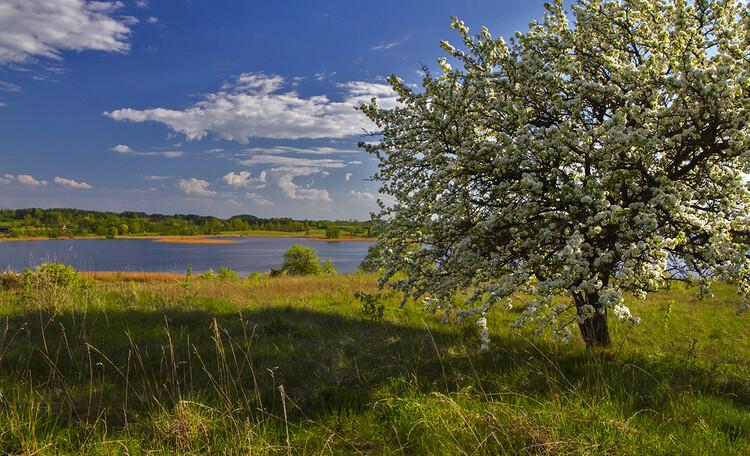 Домик «У Борисовича», Пробуждение природы...Весна...