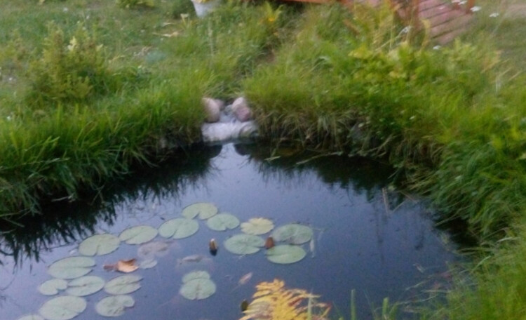 Усадьба «Боровики» (около с. «Радон»), Территория - небольшой прудик