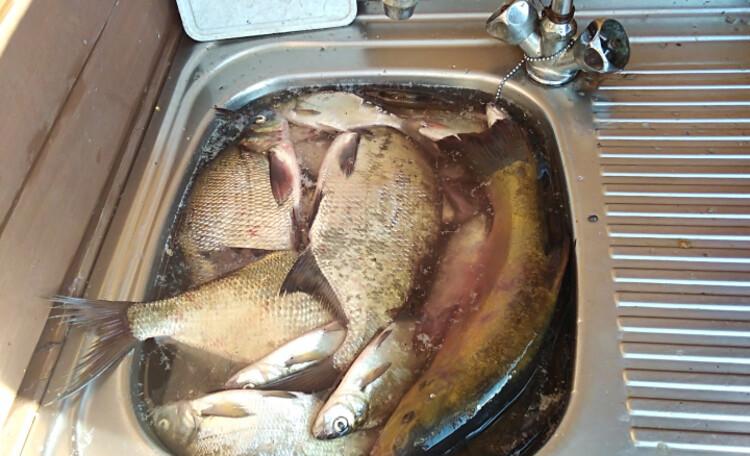 Усадьба «Богино», Рыба в наших озерах есть!
