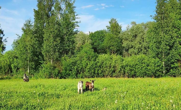 Агроусадьба «Гущино»