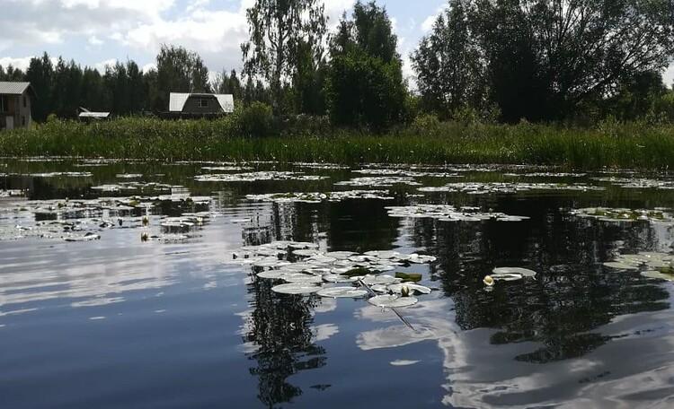 Агроусадьба  на хуторе « Хуторок Черница»
