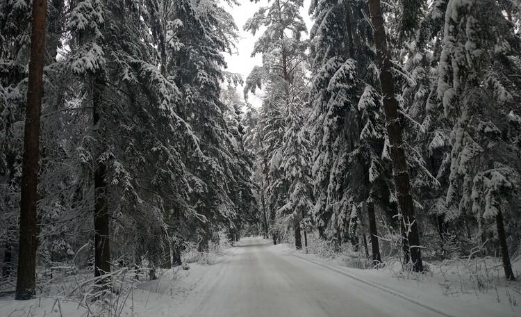 Коттедж Лесной