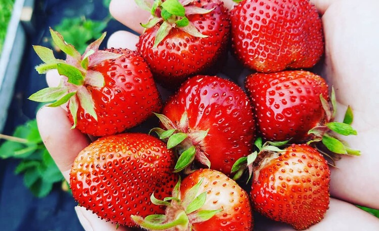 Вот такая у нас ягода