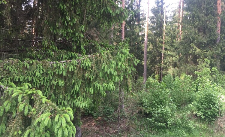 усадьба «Дыхание леса» Три отдельных Дома