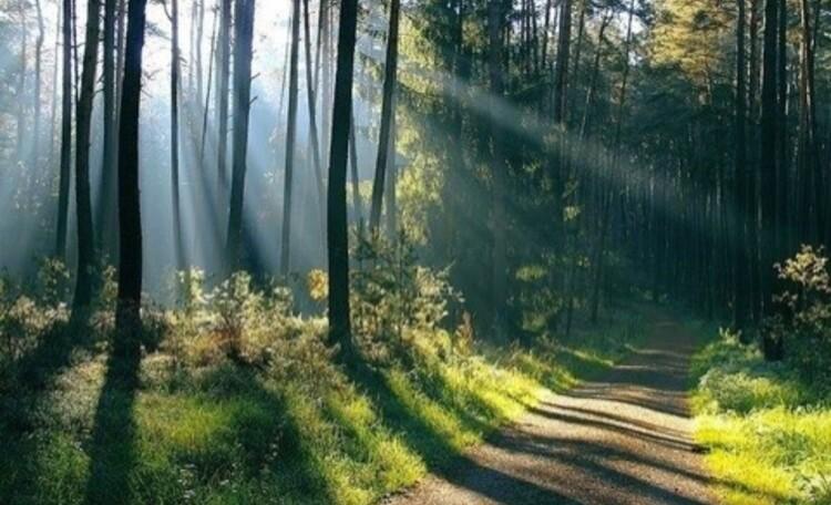 Усадьба «Беловежская светлица»