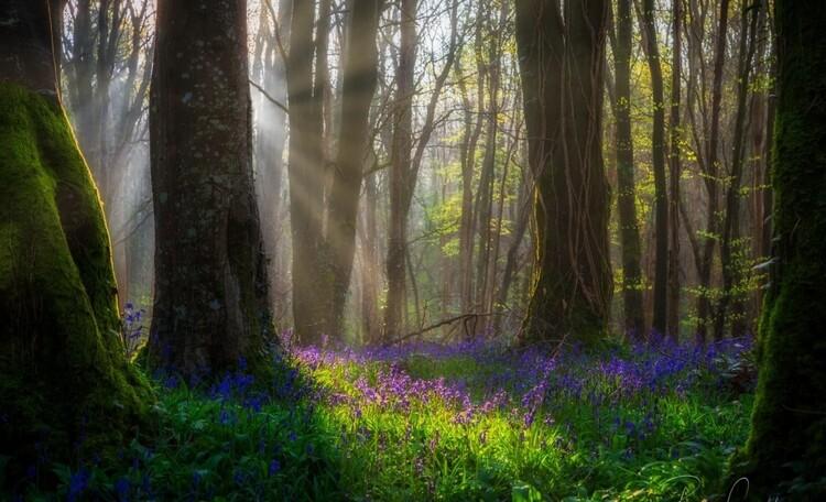 Окрестности нашей усадьбы. Красивейший лес через дорогу.
