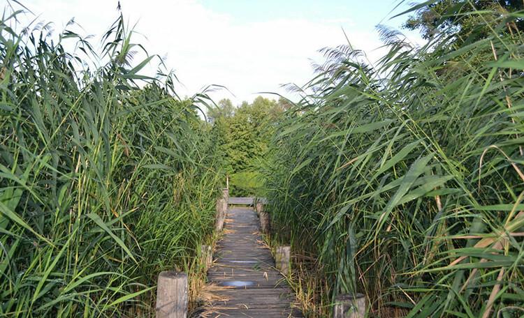 Агроусадьба «Мазычи»