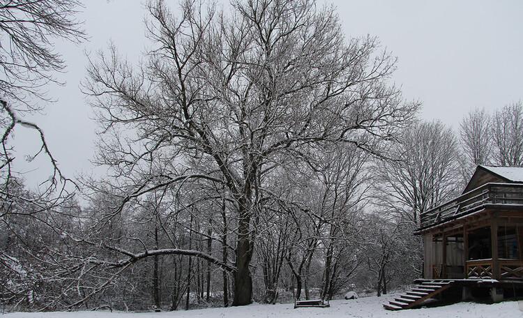 Агроусадьба «Арт-деревня Каптаруны», Дом у пруда. Гигантский канадский тополь