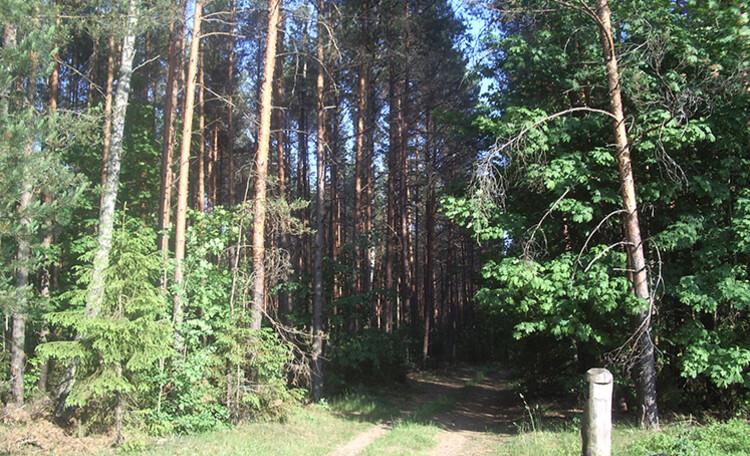 Агроусадьба «Павлиново»