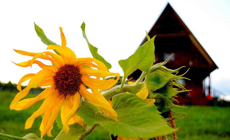 Аграсядзiба «Сланечнiкi» , Отдых на Браславских озерах в замечательной усадьбе «Подсолнухи» на берегу озера Волосо