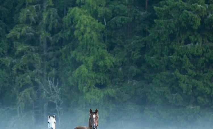 Лошадки для прогулок на телеге.