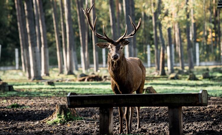 Агроусадьба «Пущанский дворик», Вольеры с животными (1,3 км от усадьбы)