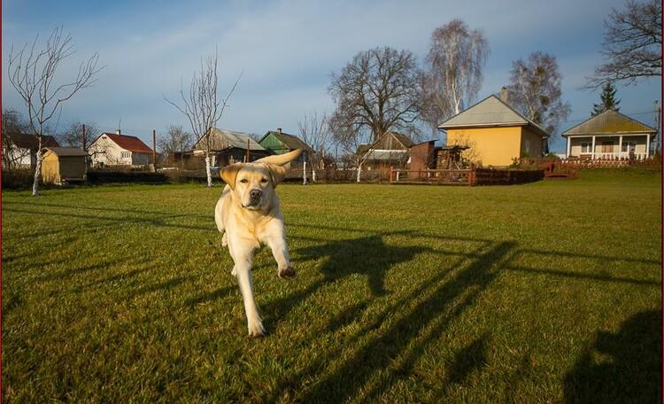 Vladimirskaya farmstead, заселение с животными!